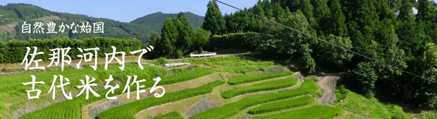 【まるざ古代餅】佐那河内で古代米を作る